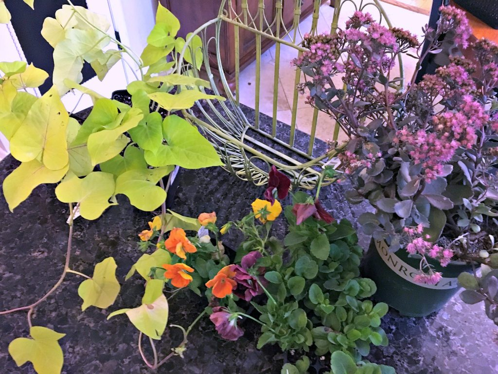 flowers for fall planters