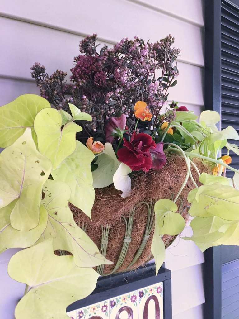 plant ideas for fall hanging baskets