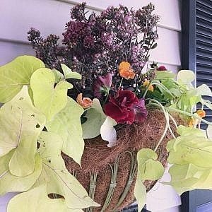 plant-ideas-for-fall_goodie